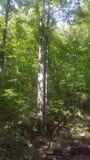 Лес 31 Стоковая Фотография
