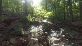 Лес 37 Стоковое фото RF