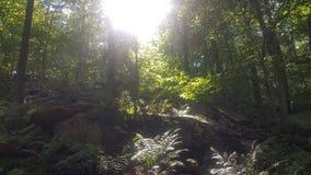 Лес 39 Стоковое Изображение
