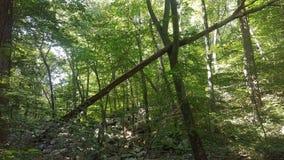 Лес 35 Стоковое Изображение RF
