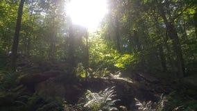Лес 39 Стоковые Фотографии RF