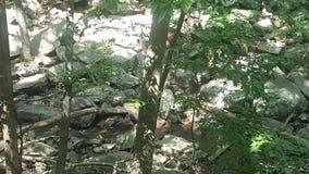 Лес 44 Стоковое фото RF