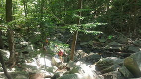 Лес 49 Стоковые Изображения