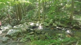 Лес 50 Стоковое Фото