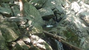 Лес 46 Стоковое Изображение