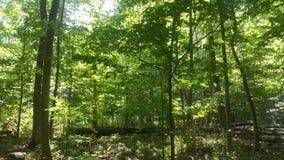 Лес 57 Стоковые Фото