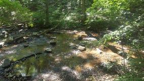 Лес 53 Стоковое Изображение