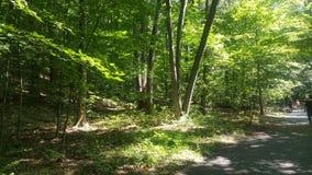 Лес 55 Стоковая Фотография