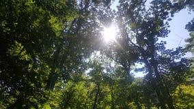 Лес 54 Стоковое Изображение RF