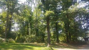 Лес 60 Стоковое Изображение