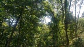 Лес 60 Стоковые Фотографии RF