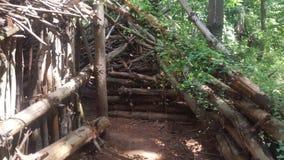 Лес 67 Стоковые Фото