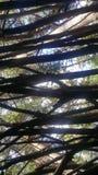 Лес 63 Стоковая Фотография