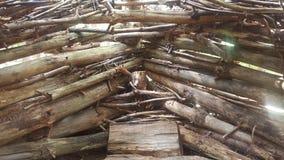 Лес 65 Стоковая Фотография RF