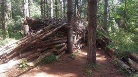 Лес 70 Стоковая Фотография