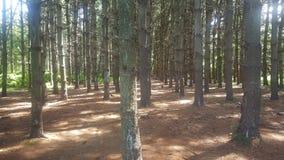 Лес 77 Стоковое Фото