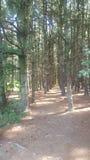 Лес 80 Стоковая Фотография RF