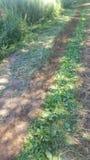 Лес 81 Стоковые Изображения RF