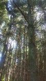 Лес 75 Стоковые Фото