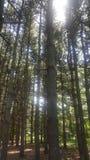 Лес 74 Стоковые Изображения