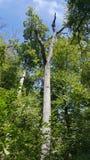 Лес 85 Стоковые Фото