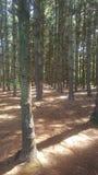 Лес 79 Стоковое Изображение