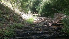 Лес 90 Стоковое Изображение