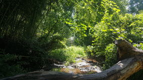 Лес 91 Стоковые Фото