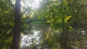 Лес 100 Стоковая Фотография RF