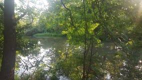 Лес 99 Стоковые Фотографии RF