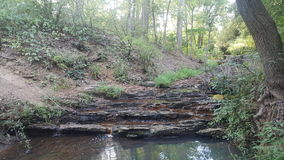Лес 101 Стоковое фото RF