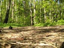 Лес Стоковые Фотографии RF
