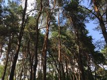 Лес Стоковые Изображения RF