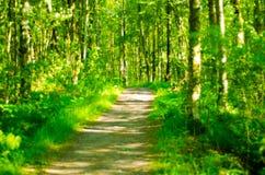 Лес 4 Стоковые Изображения