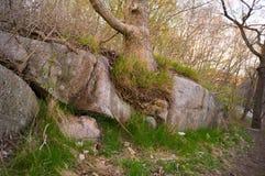 Лес 6 Стоковые Фотографии RF