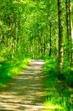 Лес 7 Стоковое Изображение
