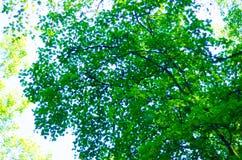 Лес 13 Стоковые Фотографии RF