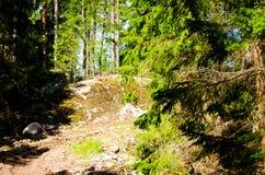 Лес 17 Стоковые Изображения