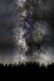 Лес Aspen Стоковое Изображение