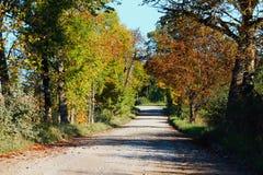 Лес Autmn Стоковая Фотография