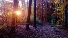 Лес Autmnal Стоковые Изображения RF