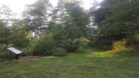 Лес b Стоковые Изображения