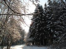 Лес Bitsevsky Стоковые Изображения RF