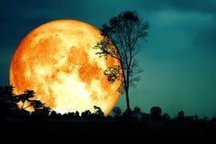 лес bl супер дерева ветви силуэта задней части луны полной крови темный стоковое изображение