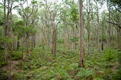 Лес Boranup Стоковые Изображения