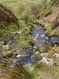 Лес Bowland в Lancashire, Англии Стоковые Фотографии RF