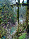 Лес Boxwood Стоковая Фотография RF