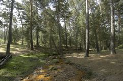 Лес, Checa, Гвадалахара стоковая фотография rf