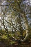 Лес Dalby - северный Йоркшир - Англия Стоковое Изображение RF