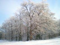 Лес December2012 зимы Стоковые Изображения